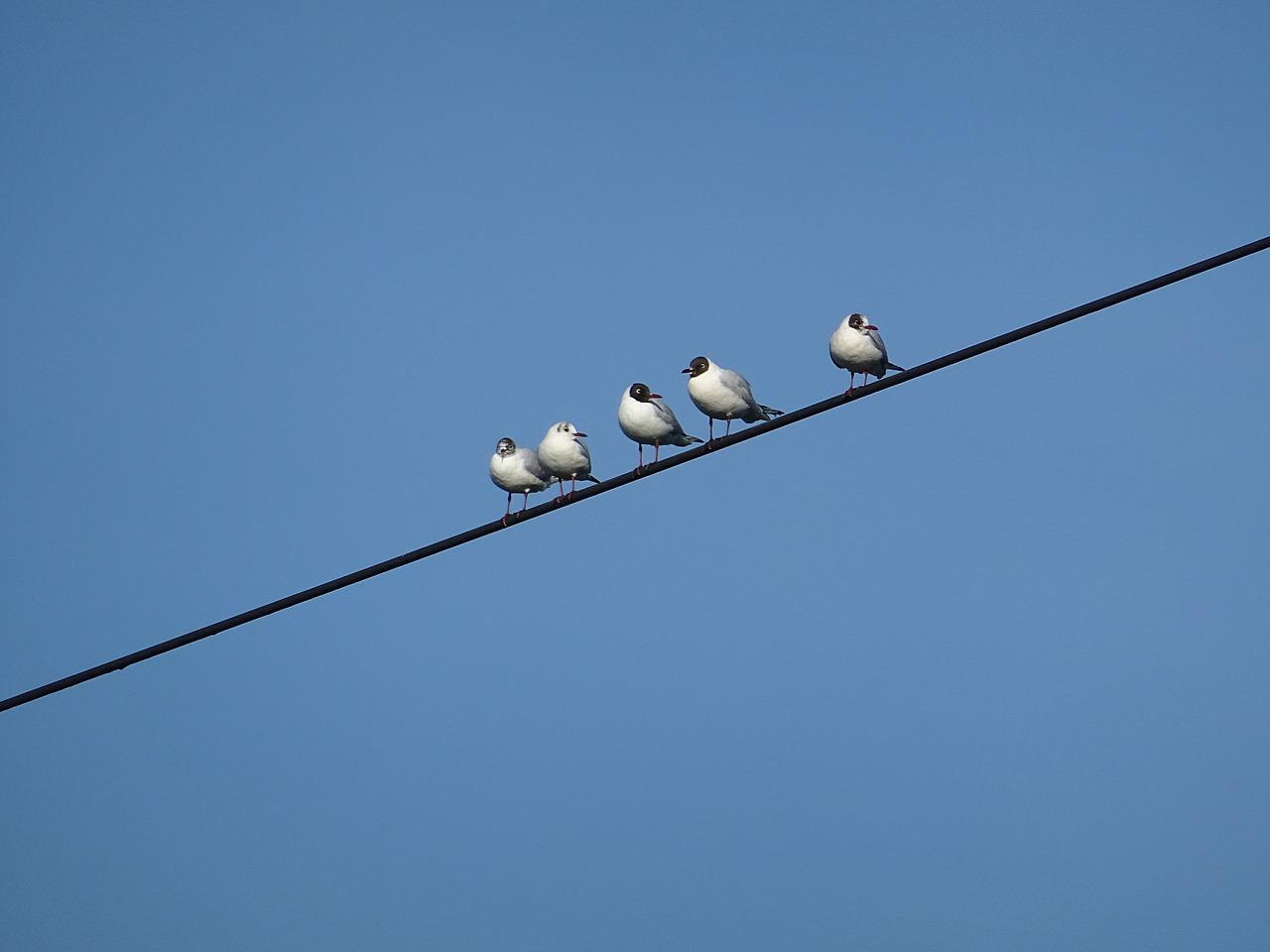 電線の上の鳥はなぜ感電しないのか…「電気」と「感電」の仕組みを学ぶ