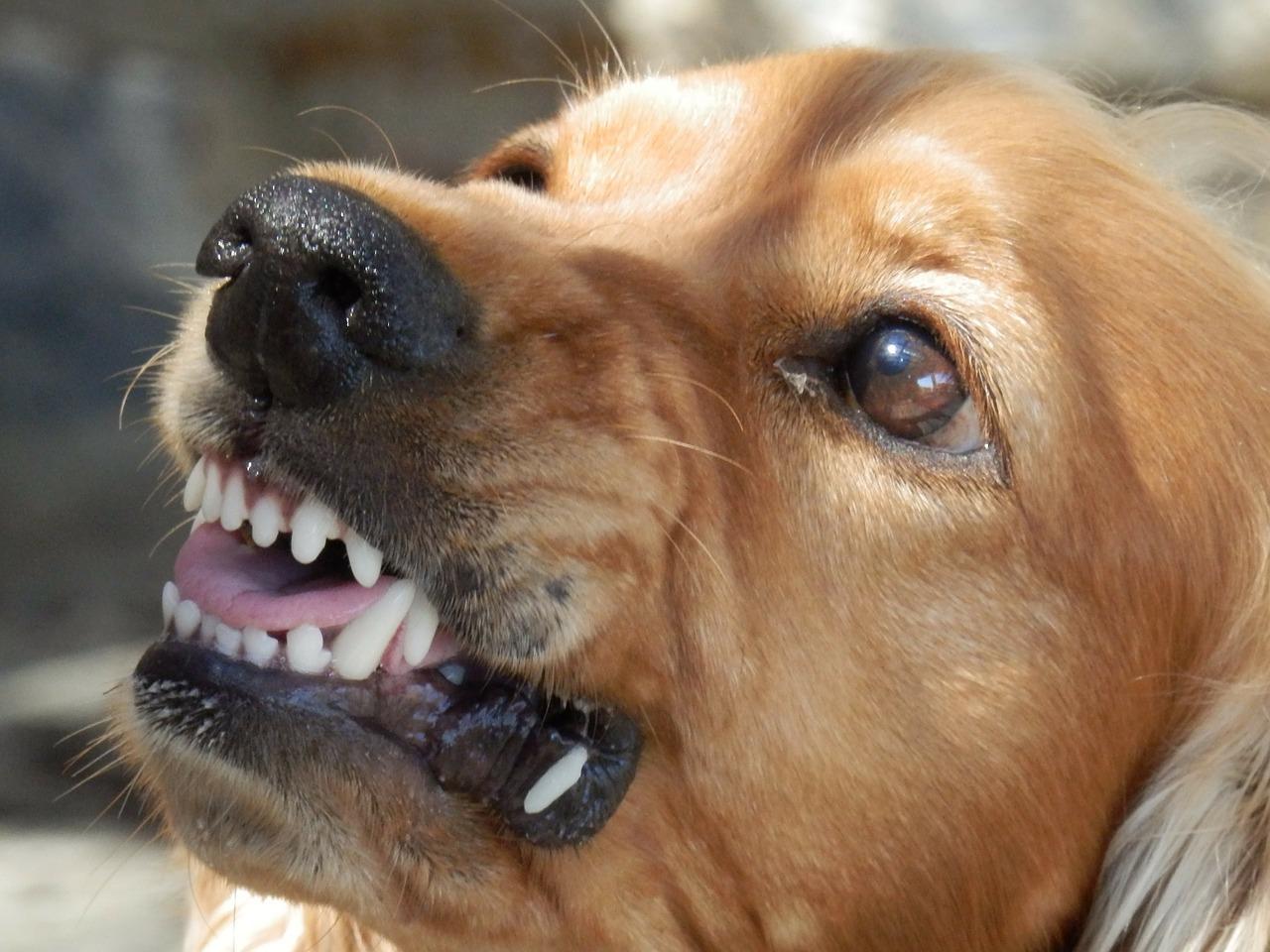 犬のしつけ【飼い主を噛んだのはなぜ】理由に注意!噛む時の対処方法