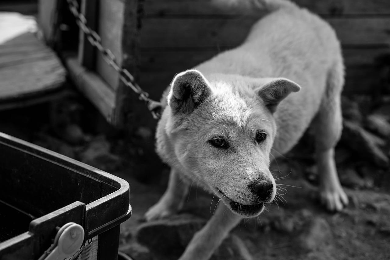 近所の犬の「騒音問題」鳴き声がうるさくて迷惑…相談&対処法は!?