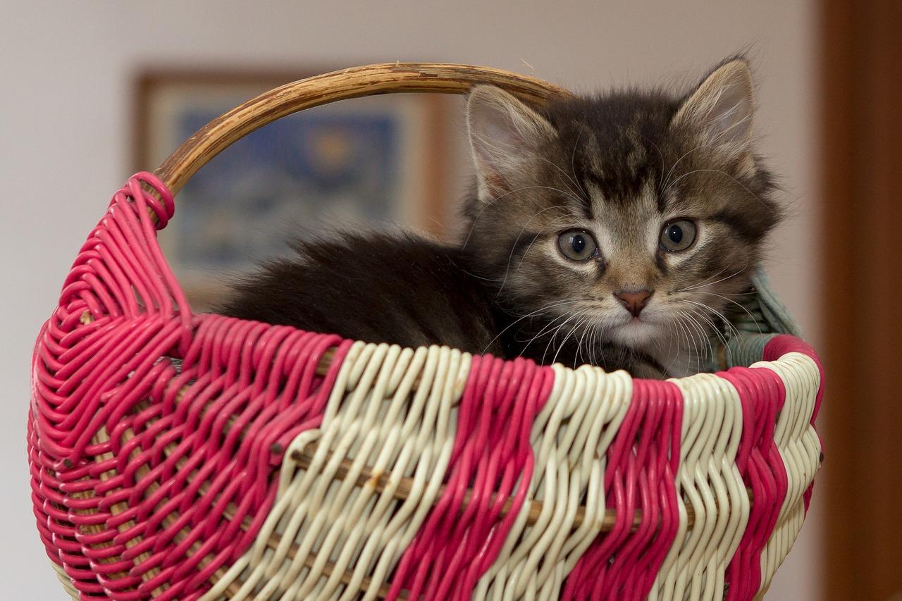 教えて☆猫が風邪を引いた時の食事法と風邪の種類について