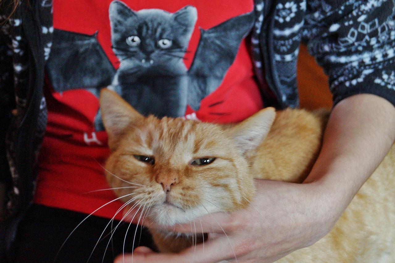 ウチの猫ってゴロゴロ言わないけど嫌われてるの?!